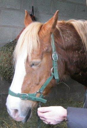 Christine putting a horse into a deep healing sleep.